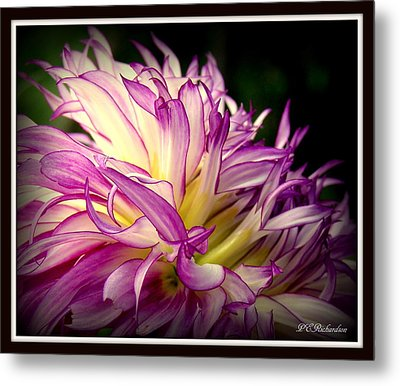 Dally Metal Print by Priscilla Richardson