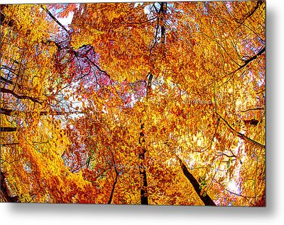Dance Of The Autumn Trees Metal Print by Kimberleigh Ladd