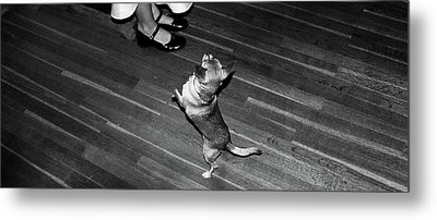 Metal Print featuring the photograph Dancing Dog  by Atom Crawford
