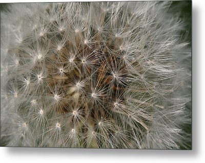 Dandelion Fairy Seeds Metal Print by Peg Toliver