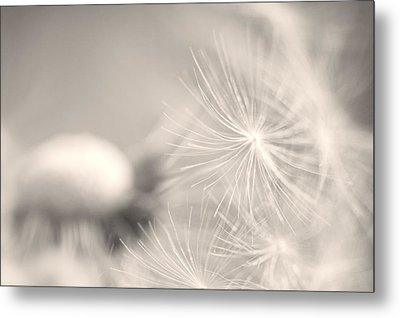 Dandelion Flower Metal Print by Ceca Photography