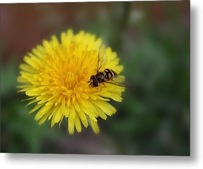 Metal Print featuring the photograph Dandelion For Dinner by Lynnette Johns