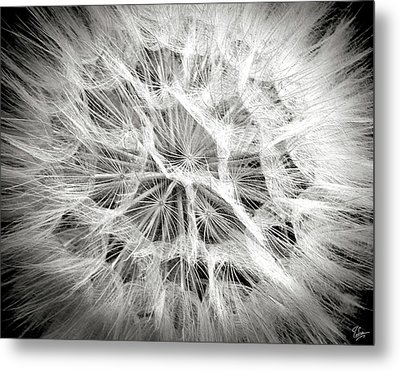Dandelion In Black And White Metal Print by Endre Balogh