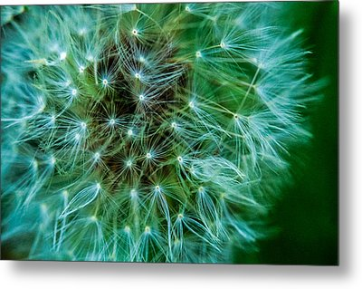 Dandelion Puff-green Metal Print by Toma Caul