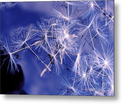 Dandelion Seeds Floating On Water Metal Print by Kaye Menner