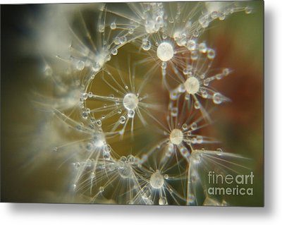 Metal Print featuring the photograph Dandelion Seeds by Yumi Johnson