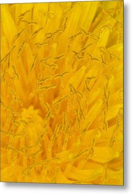 Dandelion Up Close Metal Print