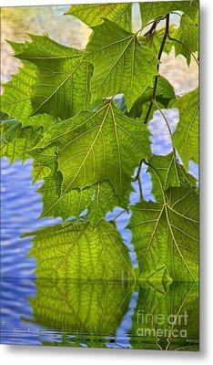 Dangling Leaves Metal Print by Deborah Benoit