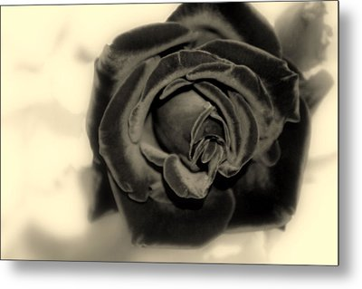 Metal Print featuring the photograph Dark Beauty by Kay Novy
