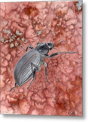 Darkling Beetle Metal Print by Inger Hutton