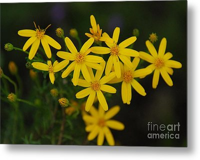 Metal Print featuring the photograph Dbg 041012-0281 by Tam Ryan
