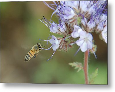 Metal Print featuring the photograph Dbg 041012-0310 by Tam Ryan