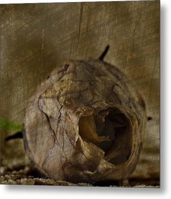 Metal Print featuring the photograph Dead Rosebud by Steve Purnell
