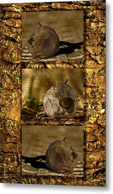 Metal Print featuring the photograph Dead Rosebud Triptych by Steve Purnell