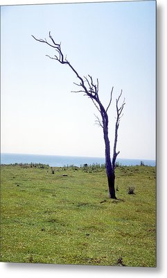 Dead Tree Metal Print by Victor De Schwanberg