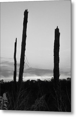 Dead Trees Against The Evening Skies Metal Print by Floyd Smith