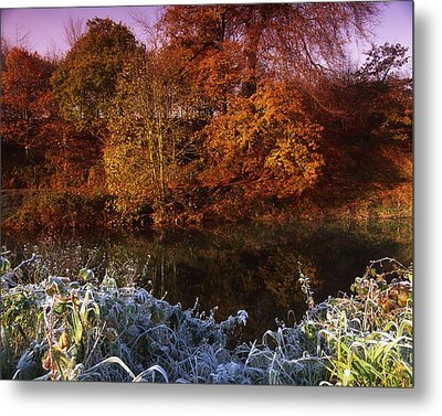 Deciduous Woods, In Autumn With Frost Metal Print