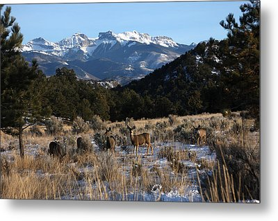 Metal Print featuring the photograph Deer Herd by Marta Alfred