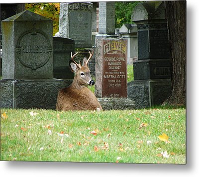 Metal Print featuring the mixed media Deer In Cemetery by Bruce Ritchie