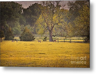 Metal Print featuring the photograph Deer In Spring Meadow by Cheryl Davis