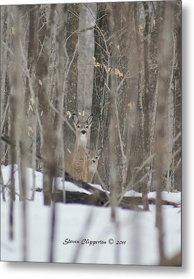 Metal Print featuring the photograph Deer In Woods by Steven Clipperton