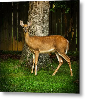 Deer One Iv Metal Print