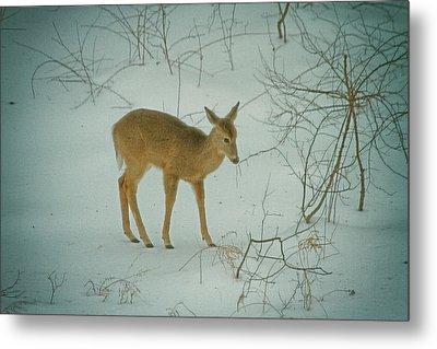 Deer Winter Metal Print by Karol Livote