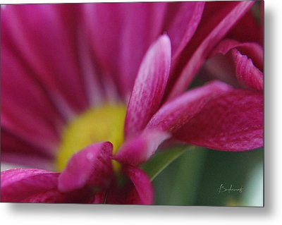 Delicacy Metal Print by Robin Lewis