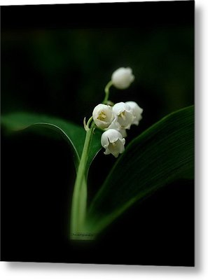 Metal Print featuring the photograph Delicate Beauty by Marija Djedovic