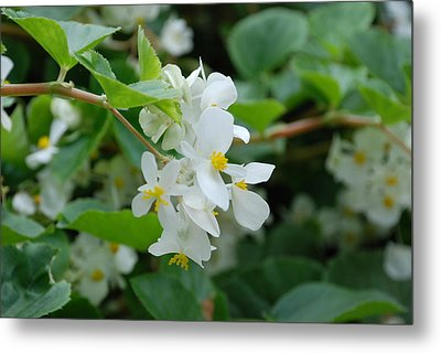 Metal Print featuring the photograph Delicate White Flower by Jennifer Ancker