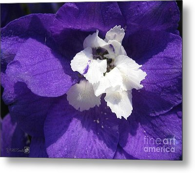 Delphinium Named Blue With White Bee Metal Print by J McCombie