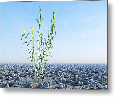 Desert Plant, Artwork Metal Print by Carl Goodman