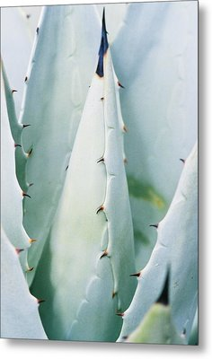 Desert Safety Metal Print by