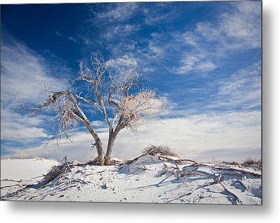 Desert Tree In White Sands Metal Print by Ralf Kaiser