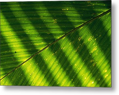Detail Of A Large Leaf With Shadows Metal Print by Bill Curtsinger