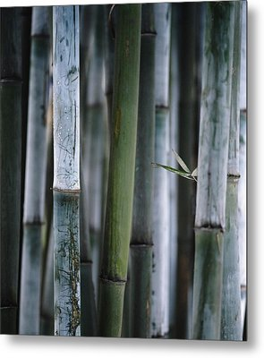 Detail Of Green Bamboo In Bamboo Park Metal Print by Axiom Photographic