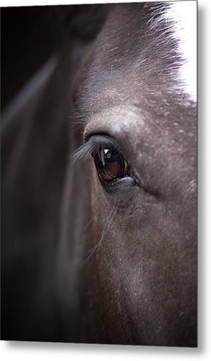 Detailed Close Up Of Black Horse's Eye Metal Print