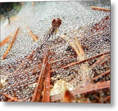 Dew Among The Needles Metal Print by Chad and Stacey Hall