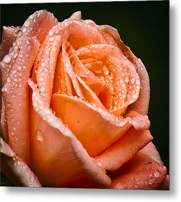 Dew Drop Tangerine Metal Print by Michael Putnam