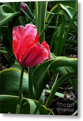 Metal Print featuring the digital art Dew Drops On Red Tulip by Glenna McRae