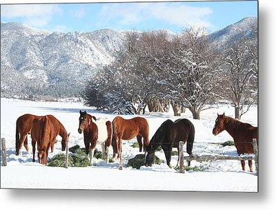 Dinner Time In The Snow Metal Print