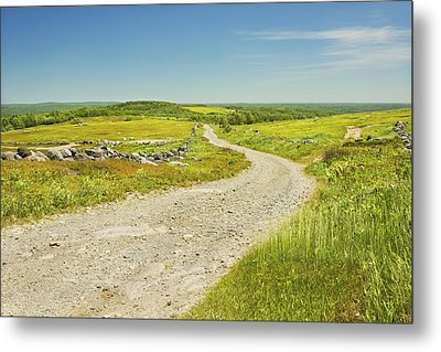 Dirt Road Going Through Large Blueberry Field Maine Metal Print