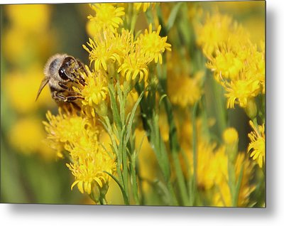 Do I Have Something On My Face Metal Print by Heidi Smith