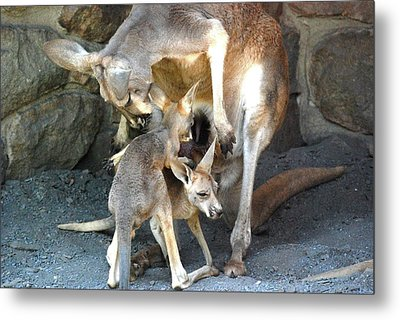 Do You Wanna Play Metal Print by Kathy Gibbons