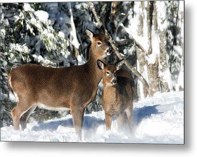 Doe A Deer Metal Print by Nancy Dempsey