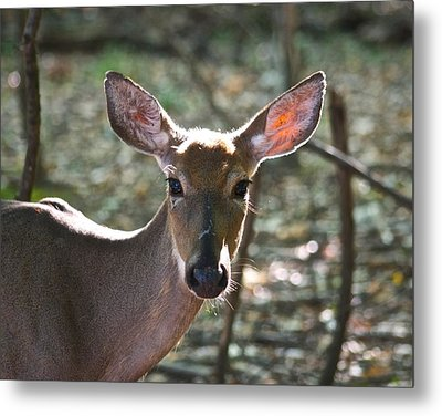 Doe Profile 9734 Metal Print by Michael Peychich