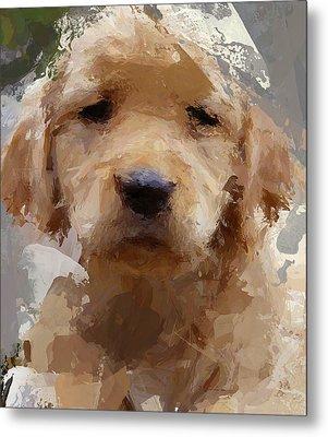 Dog 1 Metal Print by Yury Malkov