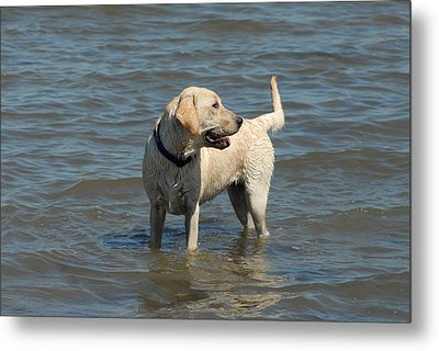 Dog 78 Metal Print by Joyce StJames