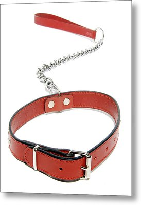 Dog Collar Metal Print by Johnny Greig