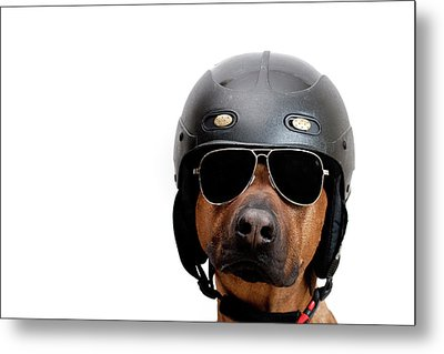 Dog Dressed As Police Man Metal Print by Ty Foster